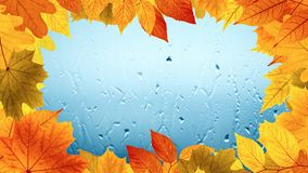 Fall rainy day, yellow and orange leaves stock image