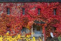 Fall red leafs climb a multi stored building fasade, omitting wi. Ndows. Seasonal Autumn background. Papingo village, Zagorochoria, Greece Stock Photos