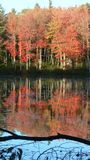 Fall: red trees reflected. Birch trees reflected in still forest pool, Gaston Pond, Barre, Massachusetts Royalty Free Stock Photo