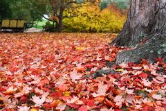 Fall - Red and Yellow Autumn Leaves Royalty Free Stock Photo