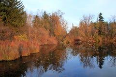 Fall Reflection Stock Image