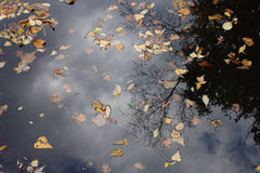 Fall Reflection Royalty Free Stock Images