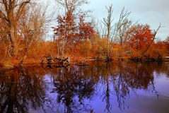 Fall Reflections royalty free stock photo