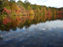 Fall Reflections. Reflections of leaves changing colors in a lake royalty free stock image