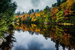 Fall Reflections - Adirondacks NY. Vivid colors of peak fall foliage reflected on pond in the Adirondack Mountain in New York Royalty Free Stock Photos