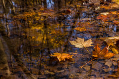 Fall reflections. Royalty Free Stock Photo
