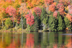 Fall reflections in Belvidere pond. In vermont Royalty Free Stock Images