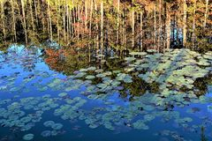 FALL REFLECTIONS. While driving in Green and Sullivan State forest I came across this quiet image. The reflection seamed to tell it all, the time of year, the stock image