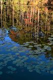 FALL REFLECTIONS. While driving in Green and Sullivan State forest I came across this quiet image. The reflection seamed to tell it all, the time of year, the stock photo