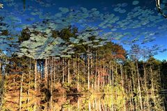FALL REFLECTIONS. While driving in Green and Sullivan State forest I came across this quiet image. The reflection seamed to tell it all, the time of year, the royalty free stock image
