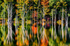 Fall reflections and a flooded forest at Monksville Reservoir Stock Photos