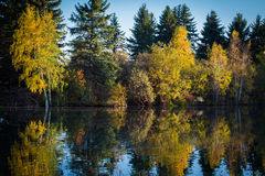 Fall Reflections Stock Photography