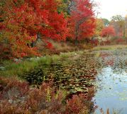 Fall Reflections, New York State Stock Photos