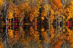 Fall reflections photo Royalty Free Stock Photo