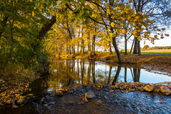 Fall reflections in a stream, in rural Frederick County, Marylan. D Stock Photo