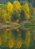 Fall-Reflexion Stockfoto