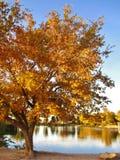 Fall-Reflexion Lizenzfreies Stockfoto