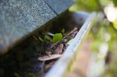 Fall-Reinigung - Blätter in der Gosse Stockfotografie
