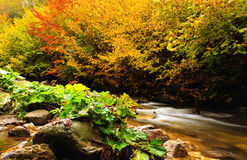 Fall Rhodopes mountain Royalty Free Stock Image