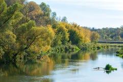 Fall River, деревья одетые в желтых листьях положился над водой Стоковые Фото