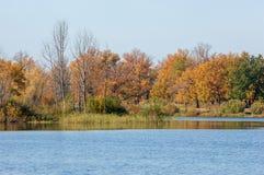 Fall River, деревья осени в золоте Стоковое Фото
