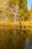 Fall River, деревья осени в золоте Стоковые Фотографии RF