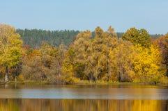 Fall River, деревья осени в золоте Стоковые Изображения RF