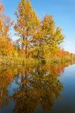 Fall River, деревья осени в золоте Стоковое Изображение