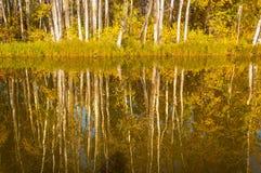 Fall River, деревья осени в золоте Стоковое фото RF