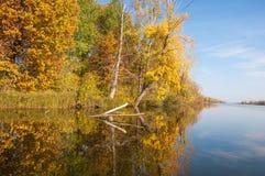 Fall River, деревья осени в золоте Стоковые Изображения