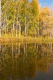 Fall River, деревья осени в золоте Стоковая Фотография RF