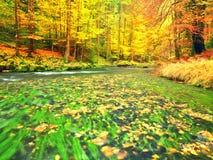 Fall River Сезон осени на реке горы Зеленые водоросли Стоковая Фотография RF