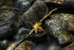 Fall River. A small river, with a twig and leaf, in autumn Stock Photo