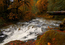 Fall River. View in the fall along the South Santiam River by Fernview Campground - near Upper Soda, OR royalty free stock photos