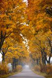 Fall road. Autumn - road with colorful, vibrant maple trees. Fall in Poland Stock Image