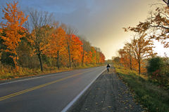Fall Road. Boy walking down a road with fall colours Stock Image