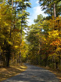 Fall Road. Road through the woods royalty free stock photos