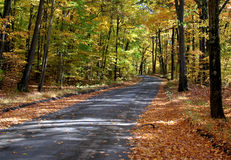 Fall Road. Gravel road through woods in fall Royalty Free Stock Photo