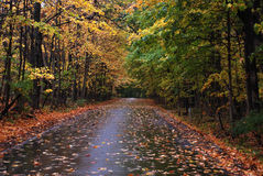Fall road. This is a shot of a road in Autumn after a rain.It is colorful and the trees form a bit of a tunnel in the image Stock Photography