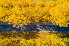 Fall. Road. Autumn travel background. Road in fall forest from above. Highway on sunny autumn day stock photo