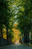 Fall road in college. Of china Stock Images
