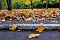 Fall, Road, Curb Stock Image