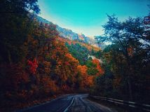 Fall road royalty free stock photography