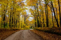 Fall road in forest of Pictured Rocks National Lakeshore Munisin. Gorgeous display of fall colors, leaves, red, orange, green and yellow trees coverd empty road Royalty Free Stock Photos
