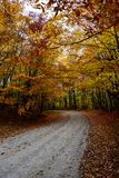 Fall road in forest of Pictured Rocks National Lakeshore Munisin. Gorgeous display of fall colors, leaves, red, orange, green and yellow trees coverd empty road Stock Images