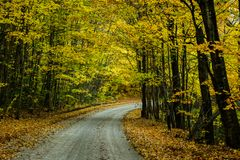 Fall road in forest of Pictured Rocks National Lakeshore Munisin. Gorgeous display of fall colors, leaves, red, orange, green and yellow trees coverd empty road Stock Photos