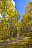 Fall road on the Grand Mesa 2. Mountain road surrounded by colorful aspen trees in the fall Stock Image