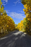 Fall road on the Grand Mesa. Mountain road surrounded by colorful aspen trees in the fall Royalty Free Stock Image