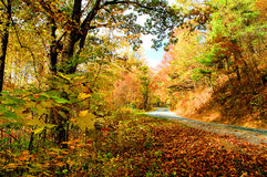 Fall road in the mountains. The beauty of the fall in the smoky mountains. colorful leaves on and off the trees Royalty Free Stock Photos