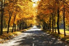 Fall road Royalty Free Stock Photos